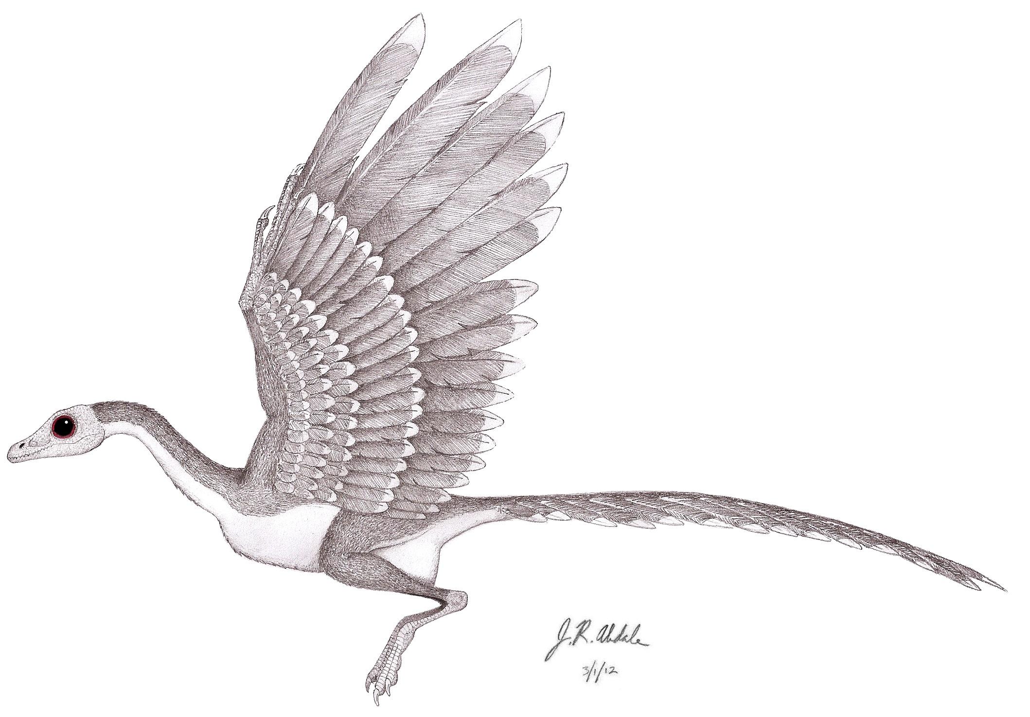 bird dinosaurs and barbarians