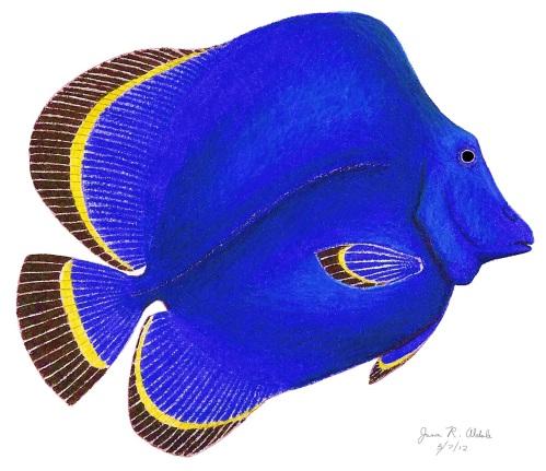 Eomesodon