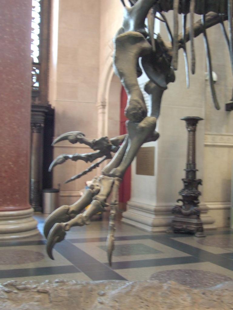 Allosaurus arm photo