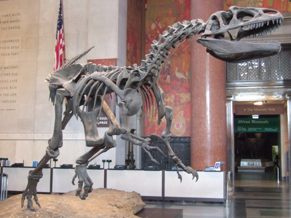 AMNH Allosaurus entrance hall