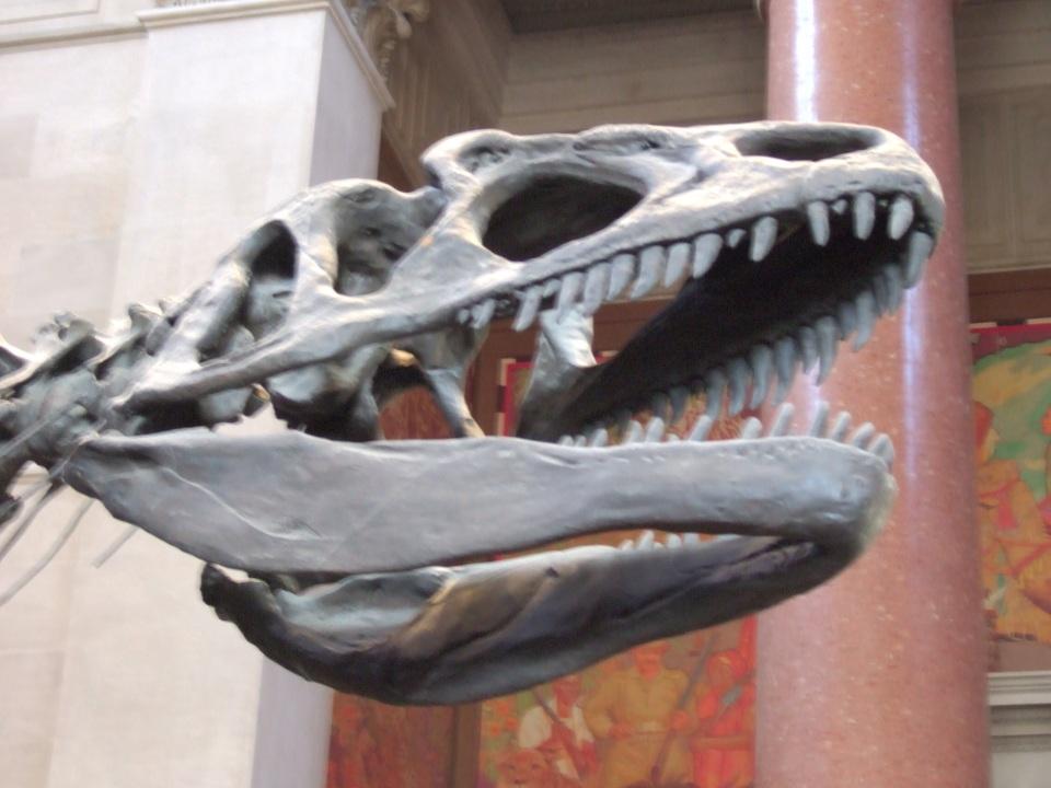 AMNH Allosaurus skull entrance hall