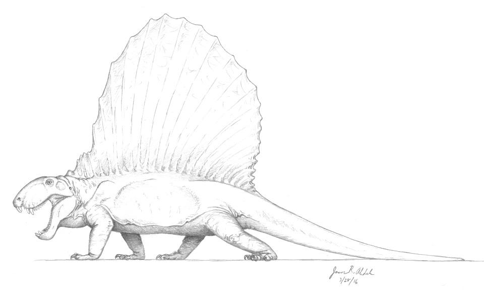 Dimetrodon sketch